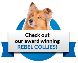 rebel-collie-badge